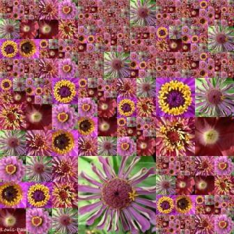 medium_Copie_de_Mandala_de_la_nature_Anniversaires_P_et_D_2006_juin_28.jpg
