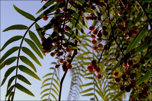Fleurs en hiver-PhotosLP Fallot (9).jpg
