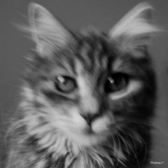 Chat-PhotosLP- DSC_0725.JPG