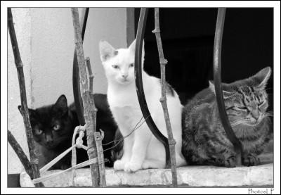 Les chats-PhotosLP Fallot.jpg