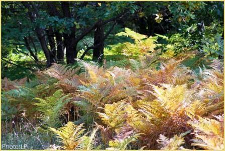 Début d'automne-PhotosLP-2008.jpg