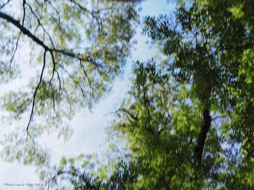 langage des arbres_Photo LP Fallot.jpg