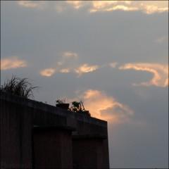 Rendez-Vous sur un toit (1) PhotosLP.jpg