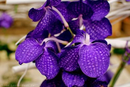 Symphonie Florale-PhotosLP Fallot (27).jpg