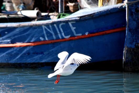 Cros de Cagnes- hors saison-PhotosLP Fallot (9).jpg