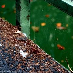 Le long du Canal St Martin-Série couleur-PhotosLP Fallot (6).jpg