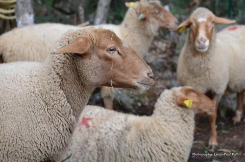 artgriculture,une oeuvre pour la planète,saint paul de vence,kiki giuliana