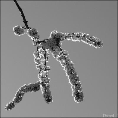 Printemps-PhotosLP Fallot (5).jpg