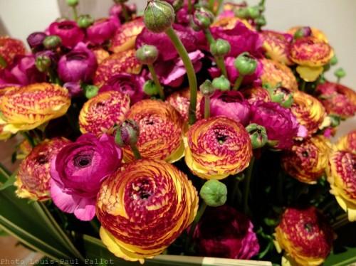 Symphonie Florale-PhotosLP Fallot (32).jpg