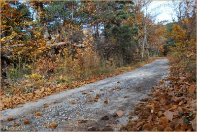 Quand la route devient chemin-PhotosLP Fallot-2010 (3).jpg
