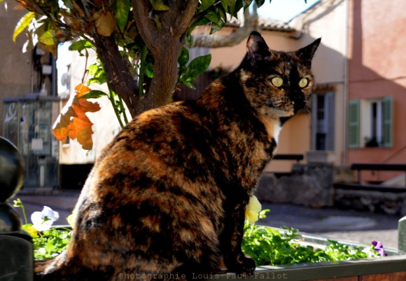Le chat-PhotosLP Fallot.jpg