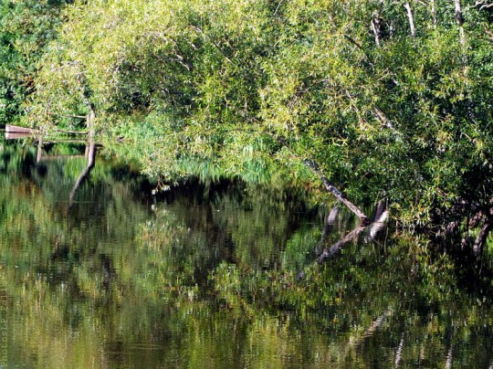 La rivière endormie - photosLP Fallot (1).jpg
