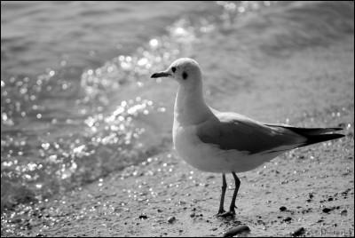 Les oiseaux blancs-PhotosLp.jpg