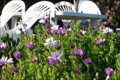 Fleurs en hiver-PhotosLP Fallot (6).jpg