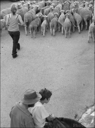 transhumance,méailles,photo
