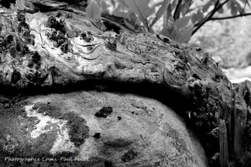Fugeret 2014-PhotosLP Fallot (2).JPG