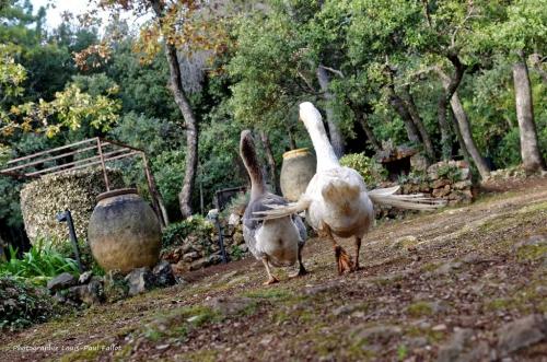 Artgriculture-PhotosLP Fallot (12).jpg