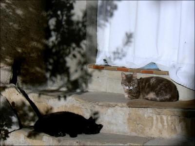 Méailles-Printemps 2007-PhotosLP Fallot (4).jpg