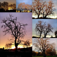 Arbres le 2 janvier-PhotosLP Fallot (2).jpg