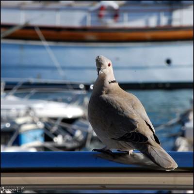 Villefranche sur Mer-PhotosLP Fallot (5).jpg