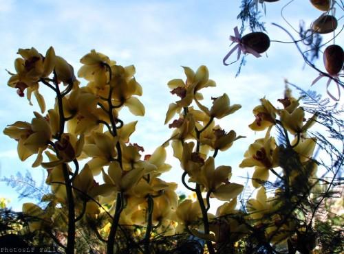 Symphonie Florale-PhotosLP Fallot (18).jpg