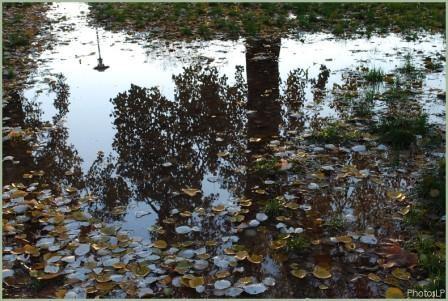 Après la pluie-PhotosLP-2008-R.jpg