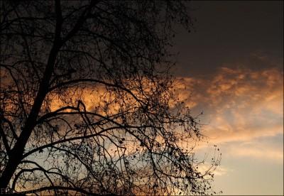 arbre,cagnes sur mer,soleil,hiver
