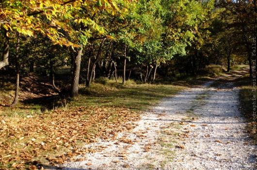 Chemins au Fugeret-PhotosLP Fallot (6).jpg
