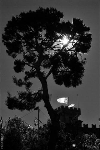 L'arbre du Haut de Cagnes-PhotosLP Fallot (3).jpg