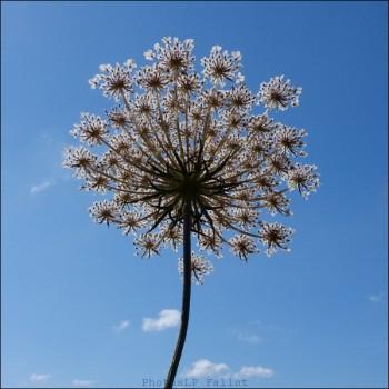 Fleurs du marais-PhotosLP Fallot.jpg