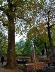 cimetière,père lachaise,photographie,défifoto,automne 2011