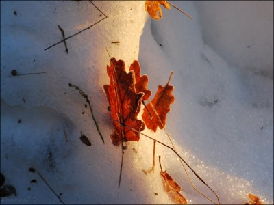 Col de Vence le 1er janvier 2011-PhotosLP Fallot (5).jpg