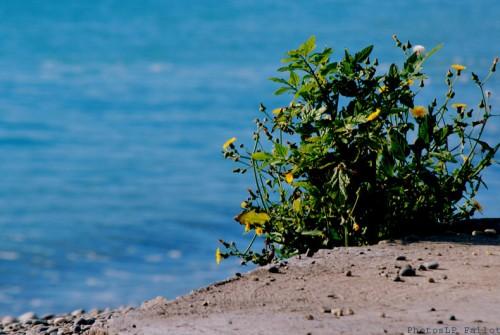 Cros de Cagnes- hors saison-PhotosLP Fallot   (3).jpg