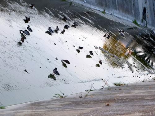 La Cagnes sans eau-PhotosLP Fallot (2).jpg