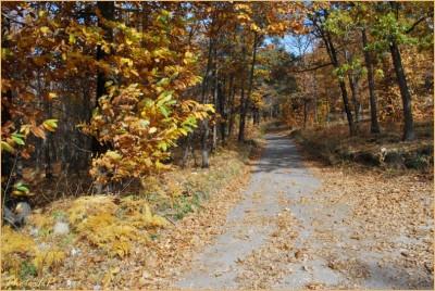 Quand la route devient chemin-PhotosLP Fallot-2010 (9).jpg