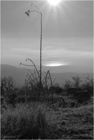 Au soleil levant-1012011-PhotosLP Fallot (5).jpg