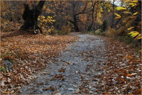 Quand la route devient chemin-PhotosLP Fallot-2010 (7).jpg