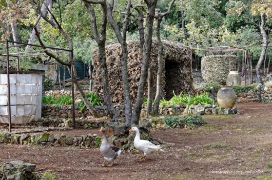 Artgriculture-PhotosLP Fallot (7).jpg