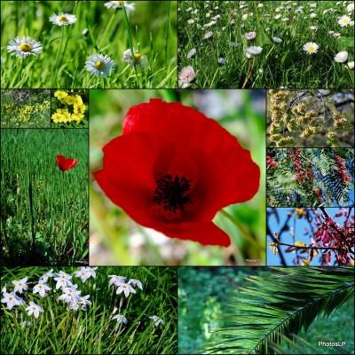 Promenade fleurie à cagnes- PhotosLP Fallot.jpg