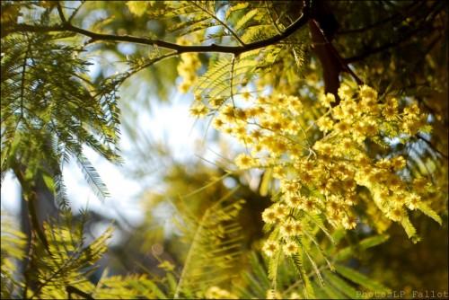 Fleurs en hiver-PhotosLP Fallot (2).jpg