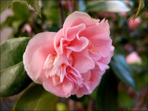 Fleurs-PhotosLP Fallot (1).jpg