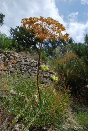 Chemin d'Entrevaux-PhotosLP Fallot (4).jpg