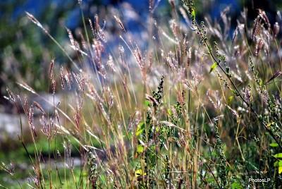 Méailles-octobre 2009-PhotosLP Fallot.JPG