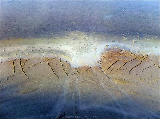 Terre saline-PhotosLP Fallot.jpg
