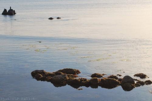 Onde marine-PhotosLP Fallot (3).jpg