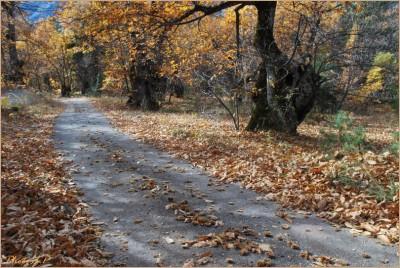 Quand la route devient chemin-PhotosLP Fallot-2010 (4).jpg