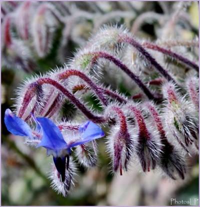 Fleurs 2010 -PhotosLP Fallot (5).jpg