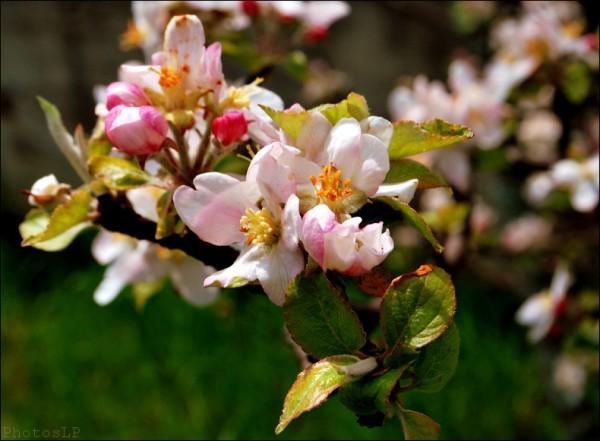 Acte 1 d'un nouveau printemps-PhotosLP.jpg