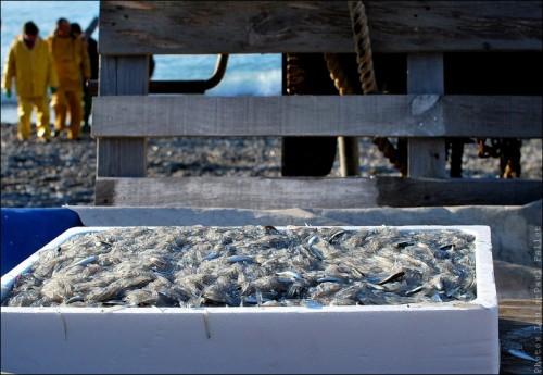 Pêche à la poutine au Cros de Cagnes-PhotosLP Fallot (7).jpg