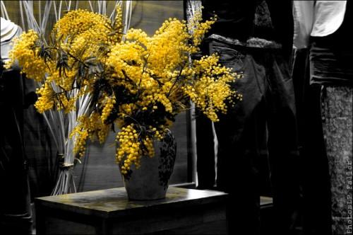 Fleurs en hiver-PhotosLP Fallot (10).jpg